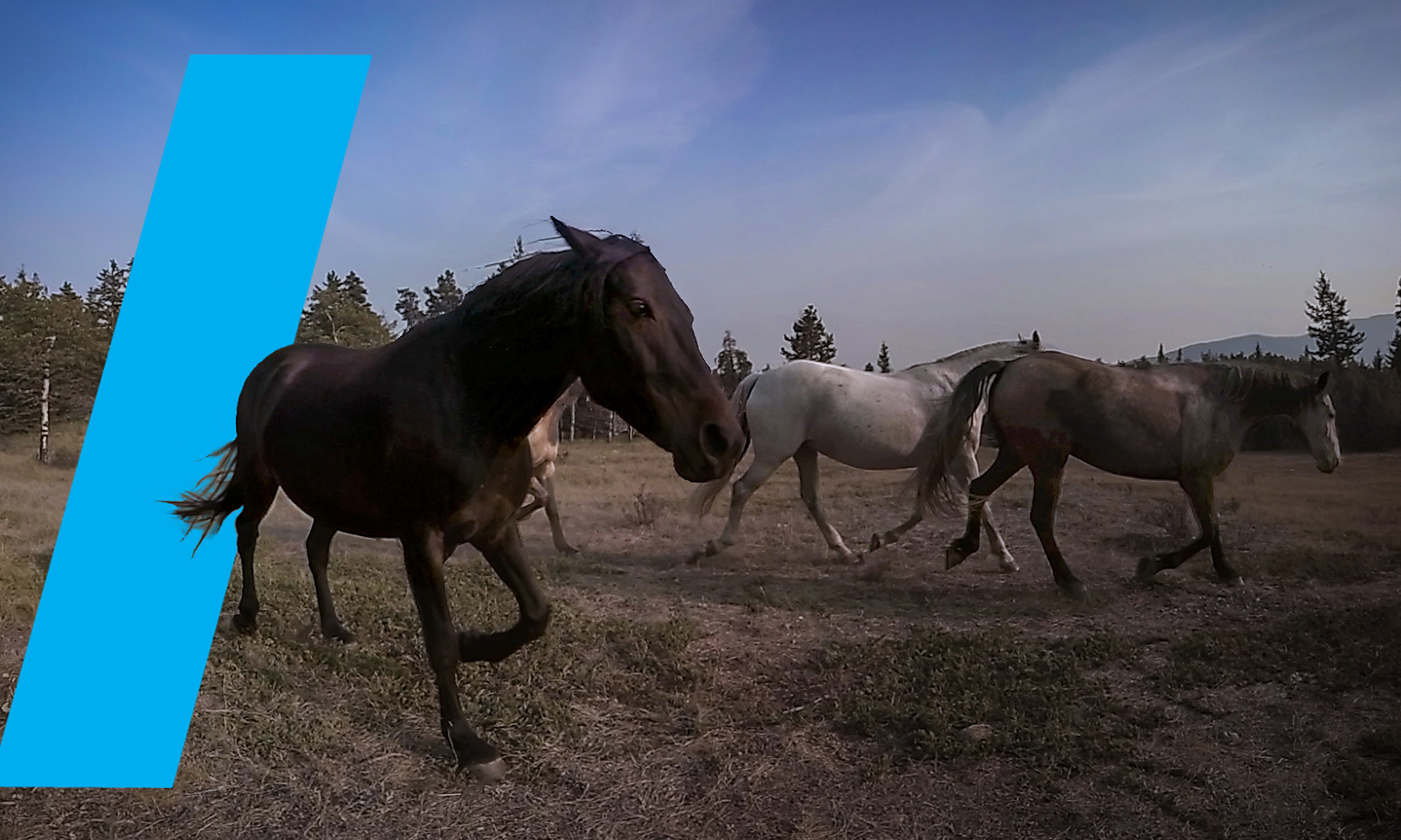 Youtube VR & Discovery Channel – Wild/